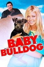 Baby Bulldog