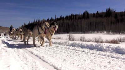Herding and Mushing