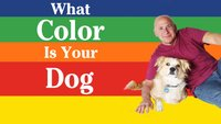 What Color is Your Dog? (Season 1)