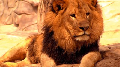 Lions: Kings of Africa