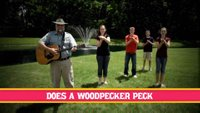 Woodpecker Song