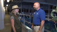 Tennessee Aquarium - Behind the Scenes