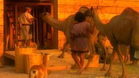 Noah's Ark and the Biblical Flood